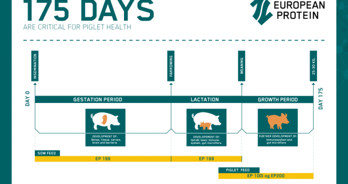 Image of the feeding concept called The first 175 days