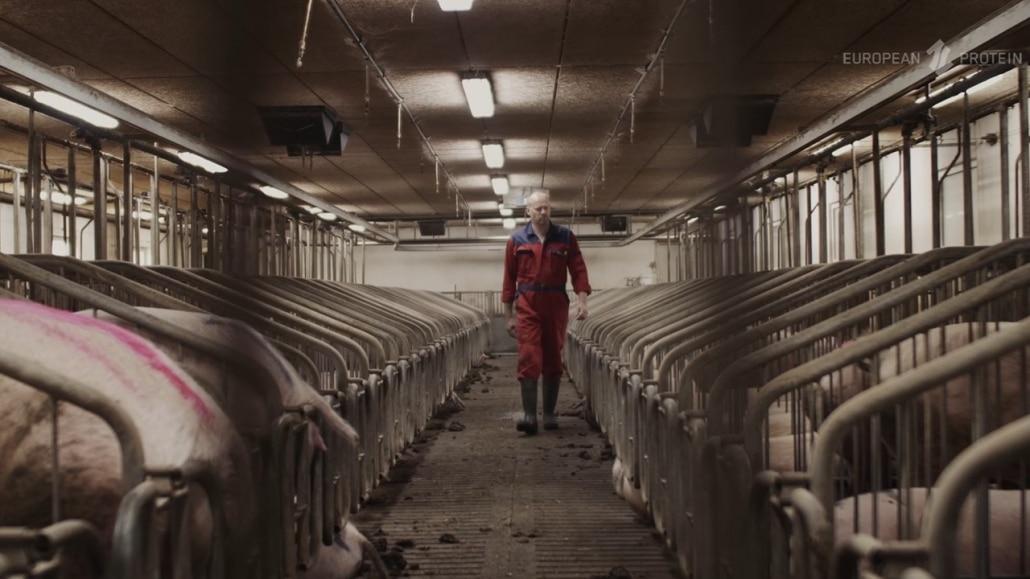 Svineproducent der fodrer EP199 til sine søer.