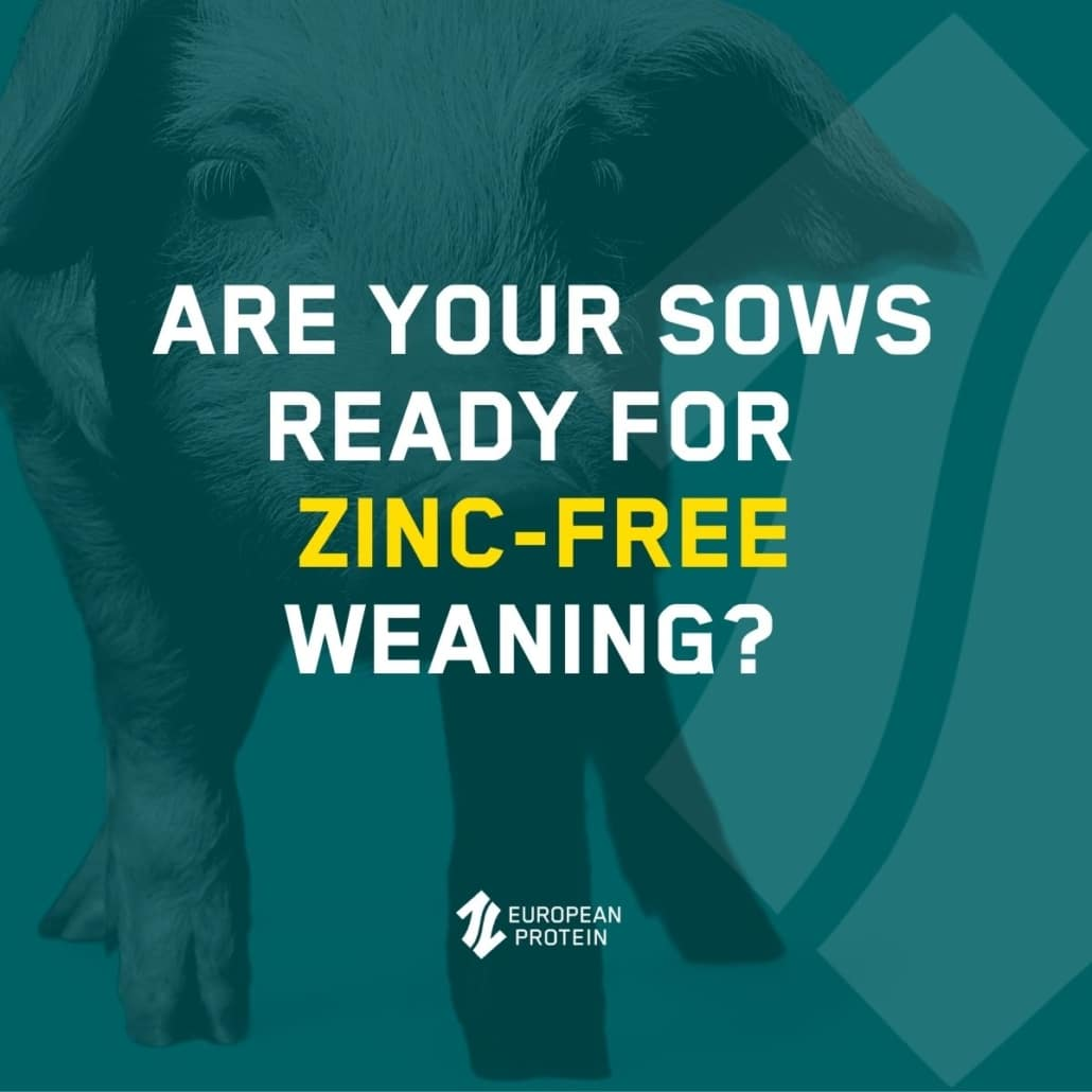 Are your sows ready for zinc free weaning